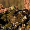 moss (1 of 1)