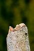 birch (1 of 1)