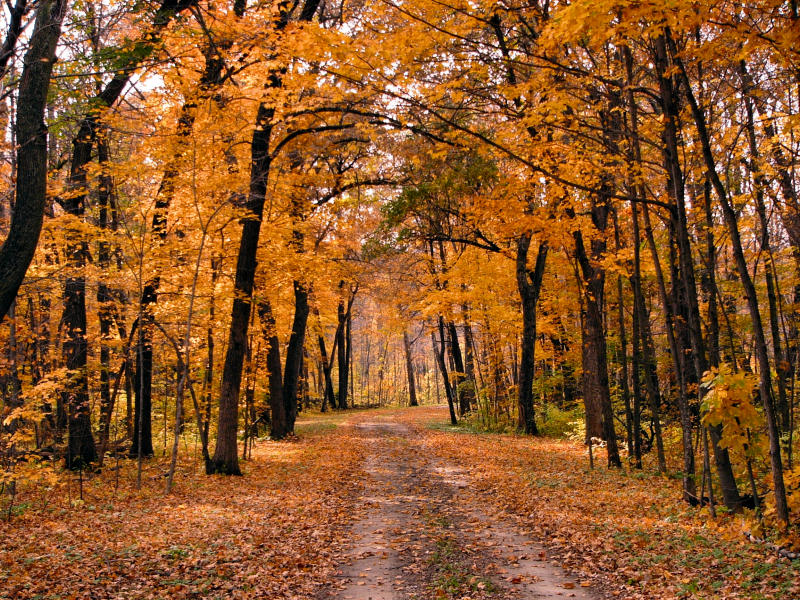 Private Road, Rush River, MN
