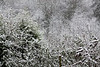 Snow (1 of 2)