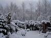 Snow Nov 2010 009