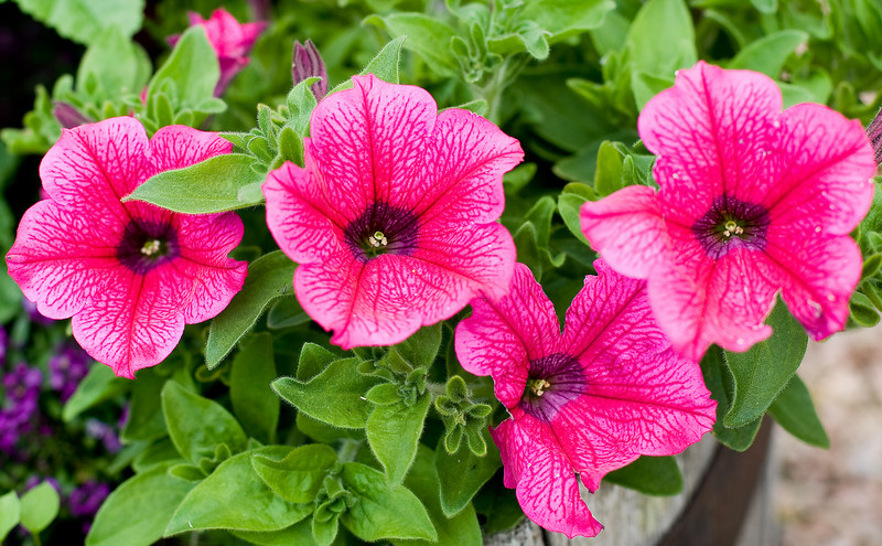 Flowers (1 of 1)
