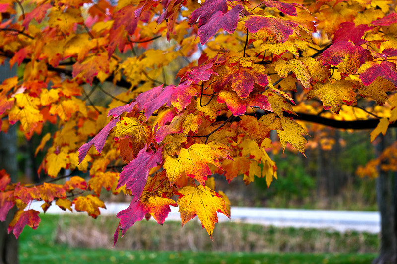 20131029%20Fall-5624-2%20edited%20v2%20use%20of%20levels-L.jpg
