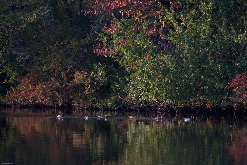Parvin State Park - October 2008-10