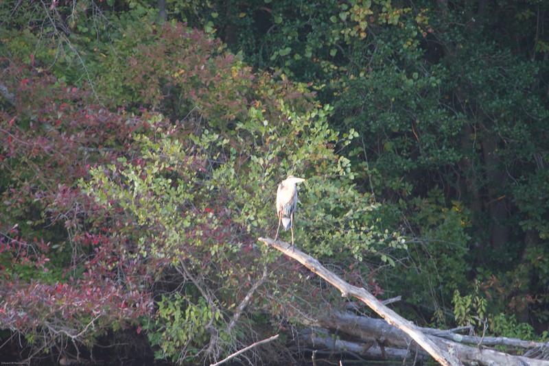 Parvin State Park - October 2008-20