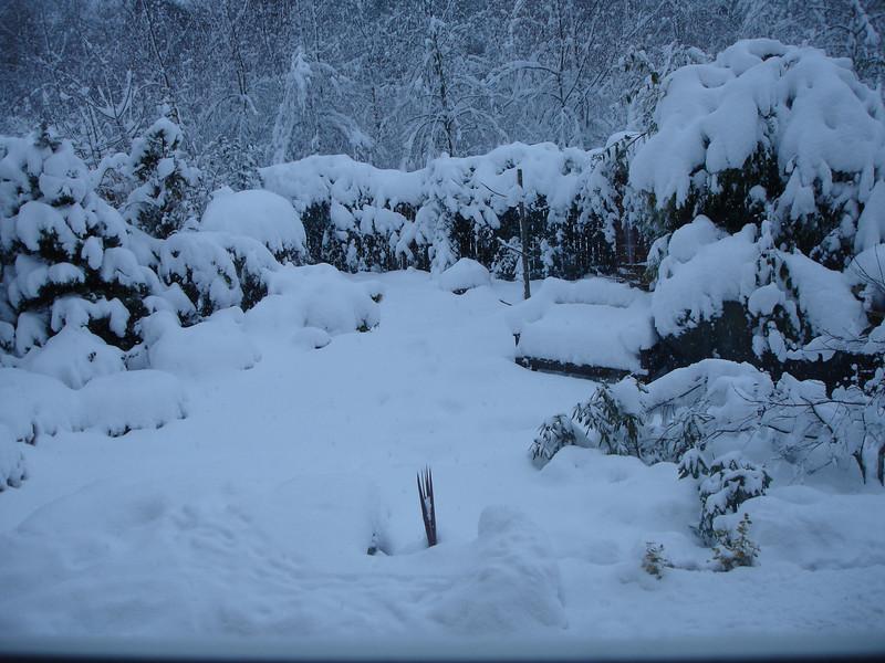 Winter 2010 014