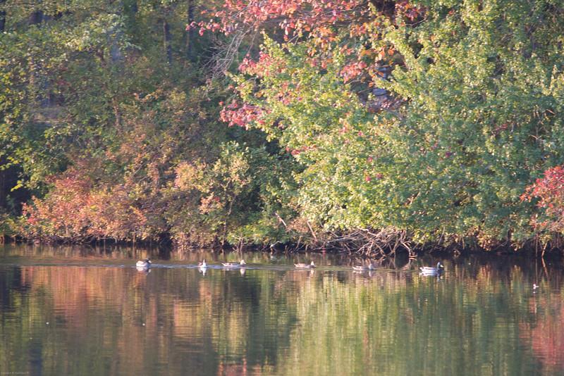 Parvin State Park - October 2008-9