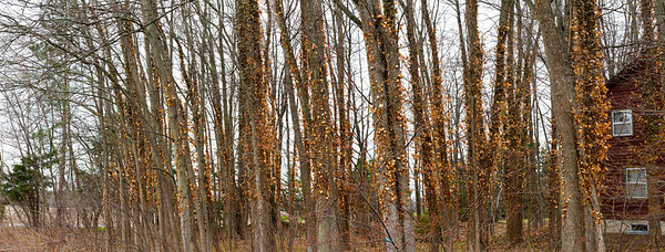 2014 Leaves Pano v1