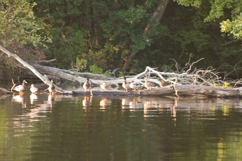 Parvin State Park - October 2008-1