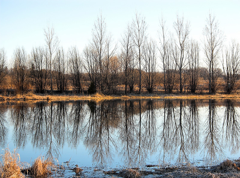 Frog Pond<br /> Ney Environmental Center<br /> Henderson, MN