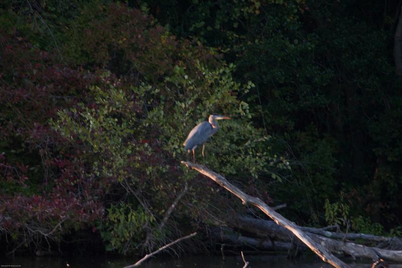Parvin State Park - October 2008-13
