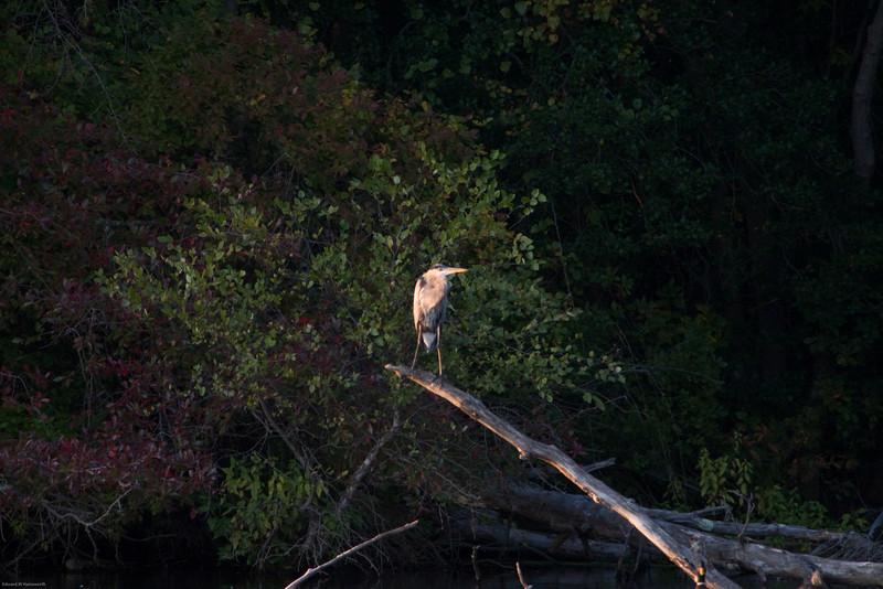Parvin State Park - October 2008-19