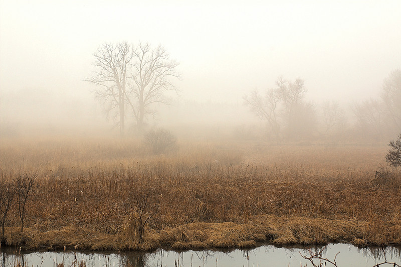 Fog Near St Peter, MN