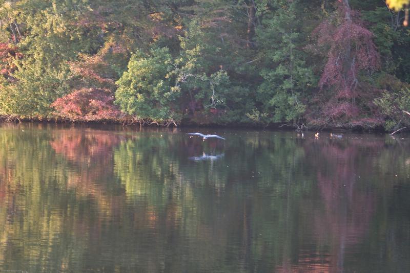Parvin State Park - October 2008-11
