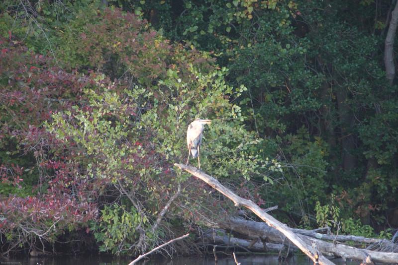 Parvin State Park - October 2008-18