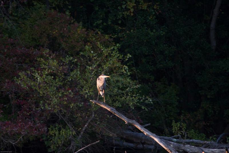 Parvin State Park - October 2008-15