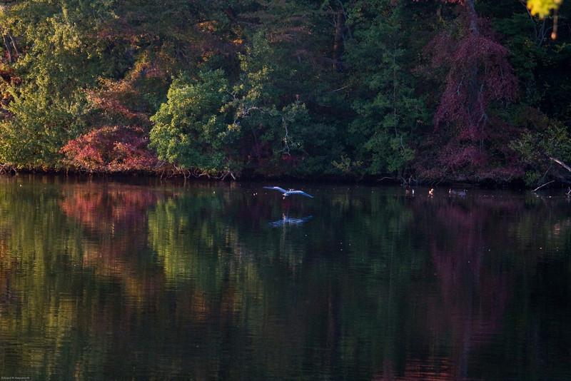 Parvin State Park - October 2008-12