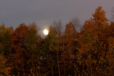 Early morning sunrise light on the trees while the moon sets behind the hill.