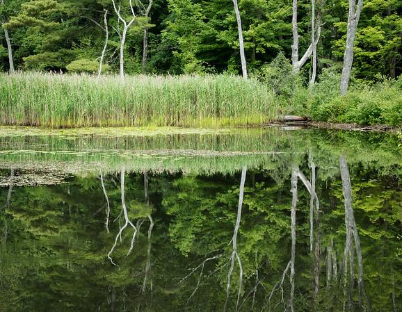 Audubun sanctuary, Berkshires