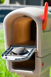 20130525 Turtle-8575