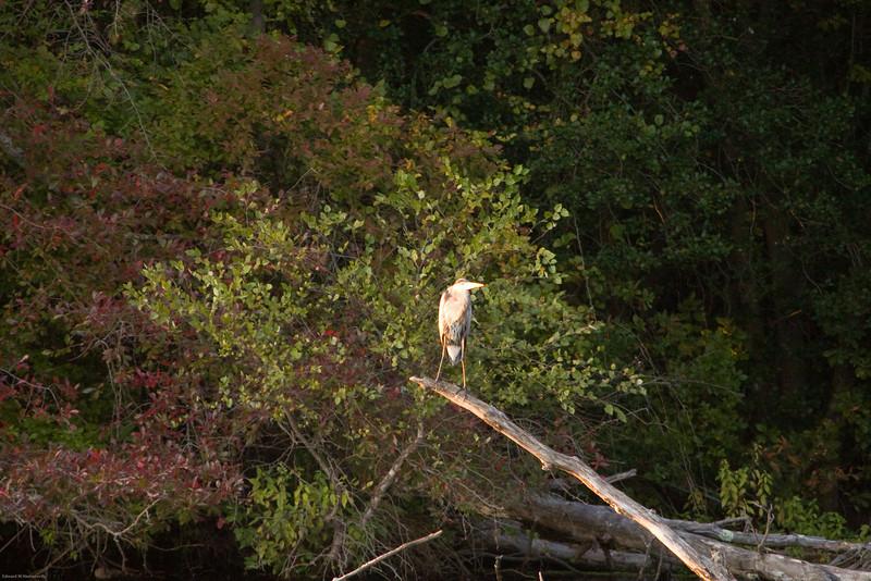 Parvin State Park - October 2008-21