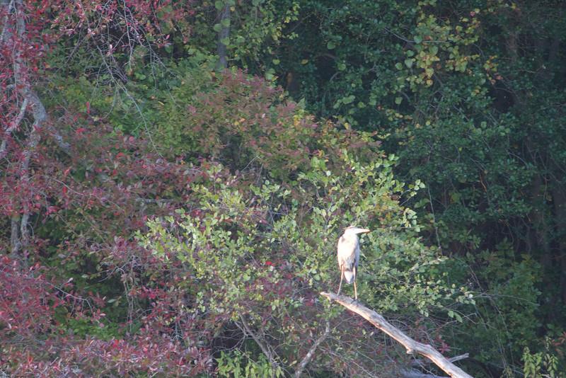 Parvin State Park - October 2008-16