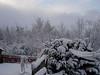 Snow Nov 2010 011