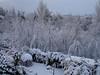 Snow Nov 2010 015