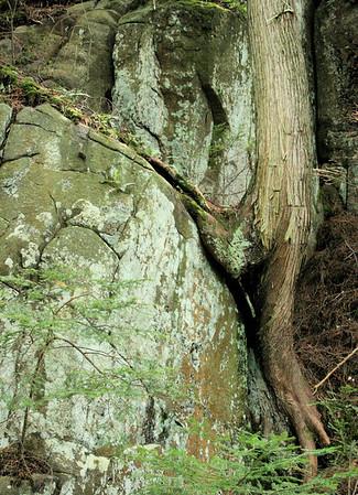 cedar straddling rock, Rich Lake, Adirondacks