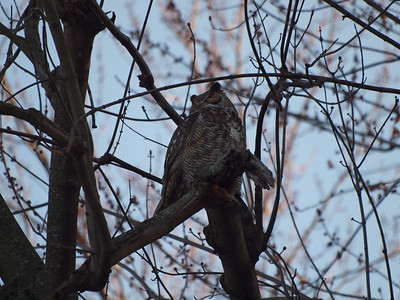 Owl Forest Park Jan 2013