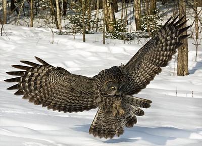 Owls 2013