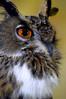 Owls 27