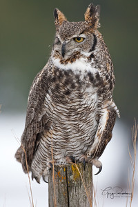 Owl festival