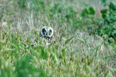 Owls2012