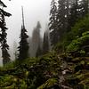 PCT 2016 Suprise Lake Trail 7-22-16_MG_0301