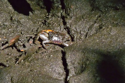 Crab, Ocean Ridge Natural Area