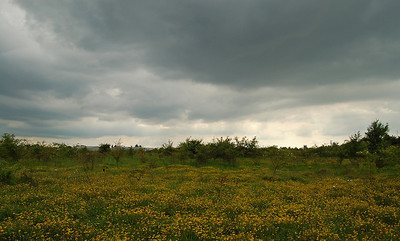 Threatening skies over the nature reserve, but thankfully they passed quickly