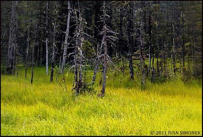 """ON THE EDGE"",Wrangell,Alaska,USA."