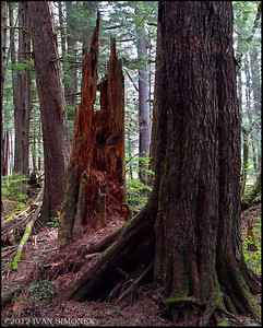 """TONGASS RAINFOREST #2"",Wrangell,Alaska,USA."
