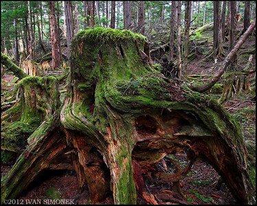 """TONGASS RAINFOREST #1"",Wrangell,Alaska,USA."