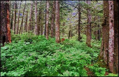 """SOLARIZED TONGASS"",Alaska,USA."