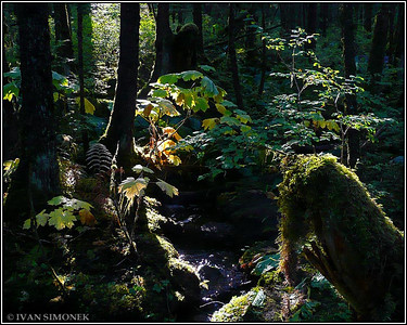 """IN A RAINFOREST"",Wrangell,Alaska,USA."