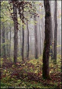 """""""VERDUN FOREST"""",France."""