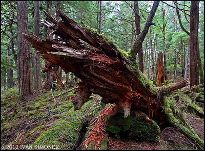 """TONGASS RAINFOREST #4"",Wrangell,Alaska,USA."