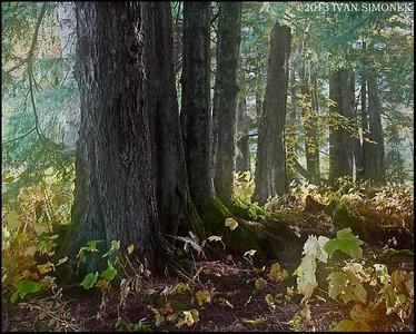 """TREES"",Wrangell,Alaska,USA."