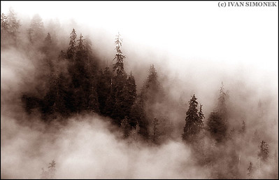 """FOGGY RAINFOREST"",Wrangell,Alaska,USA."