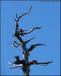 """DEAD TREE 2"",Wrangell,Alaska,USA."