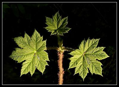 PLANTS & TREES/ROSTLINY A STROMY.