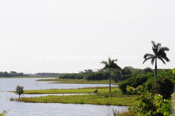 A Savannah in Cuba EPV2276