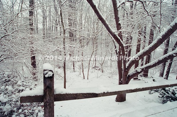 Winter scene in Maryland after Snow sorm